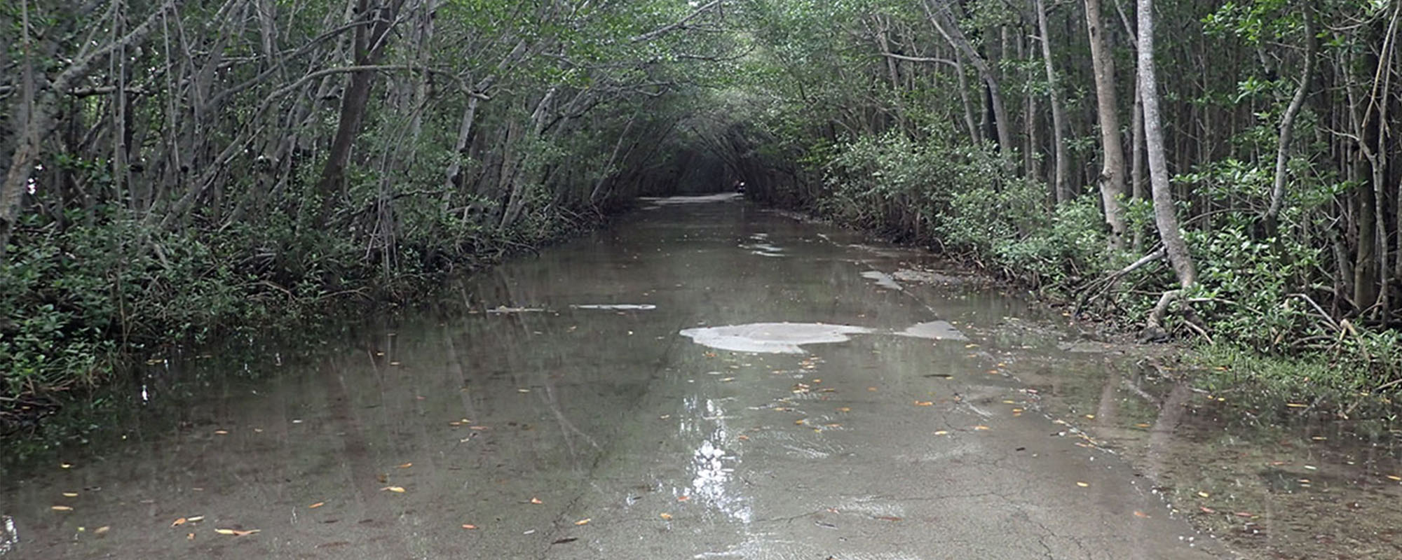 Matheson Hammock Park Sea Level Rise Flood Mitigation Roadmap and Plan