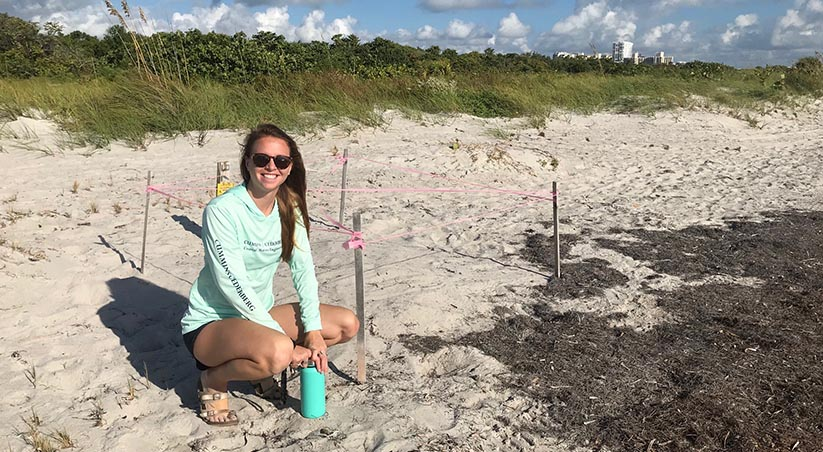 Sea Turtle Nesting Season Underway in Florida